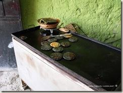 Gorditas de Maiz Negro en Bernal