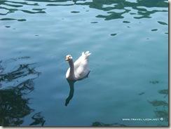 Lago de Camecuaro