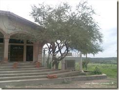 Mezquite en Teocaltitán de Guadalupe